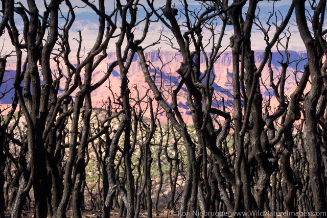 Manti La Sal National Forest