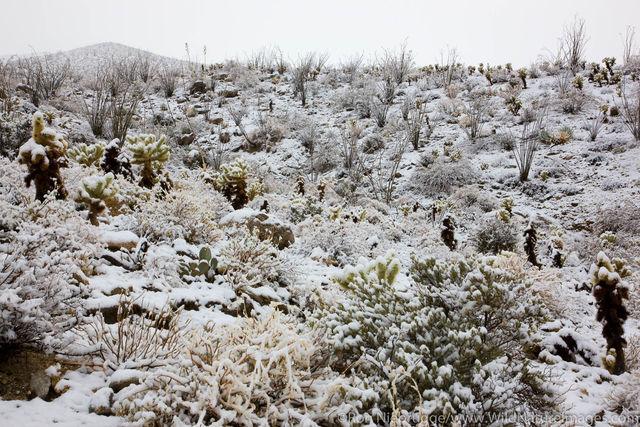 Snow in Anza Borrego Desert