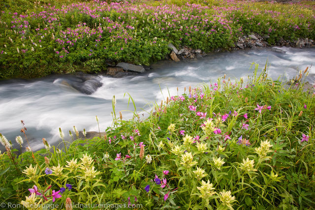 Wildflowers on Mount Marathon