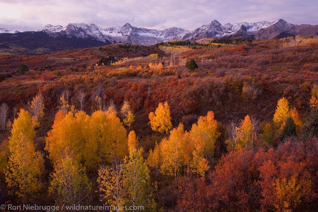 Autumn colors, Dallas Divide