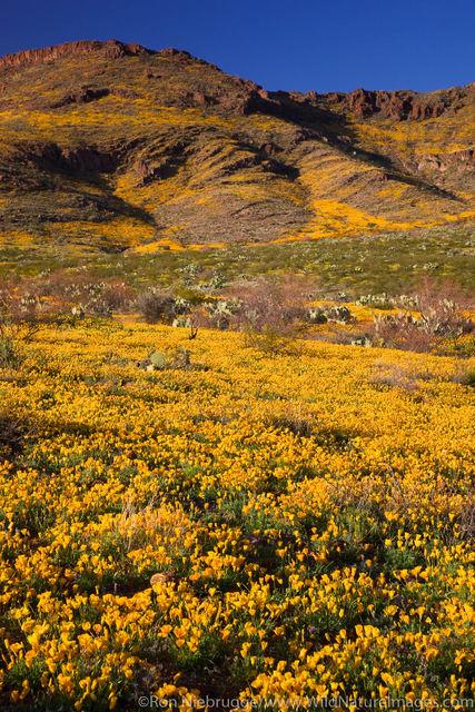 Black Hills Wildflowers