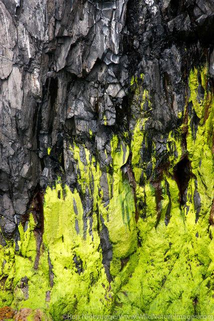 Algae Patterns
