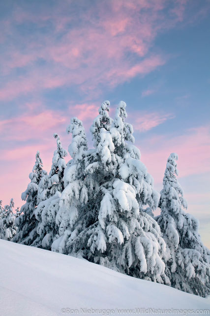 Chugach National Forest, Alaska Chugach, winter, turnagain pass