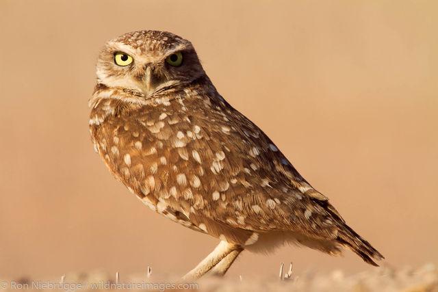 Imperial Valley, California, bird, photos