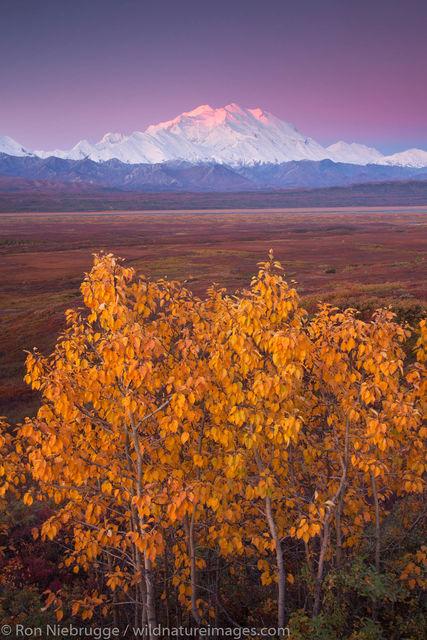 Fall Colors, Denali National Park