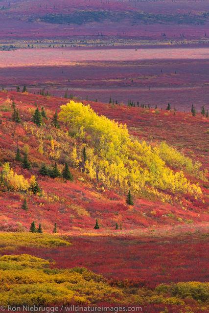Denali National Park, Alaska, photo, picture, autumn, fall