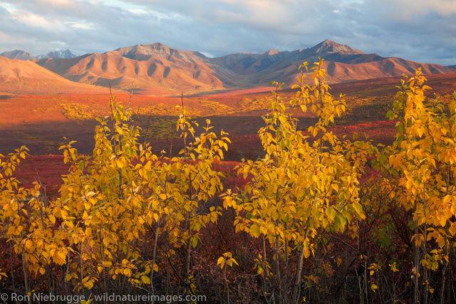 Autumn, Denali National Park