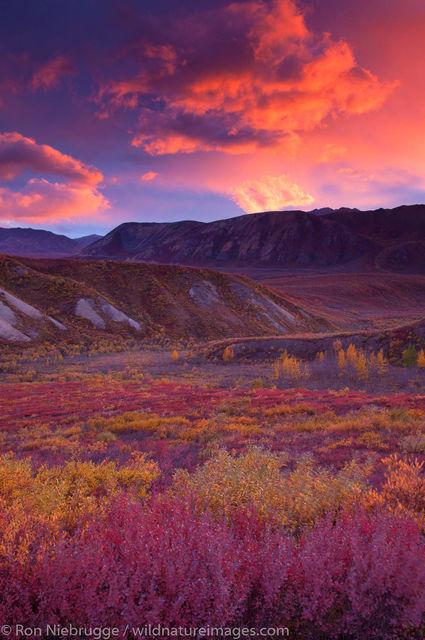 Autumn Sunset, Denali