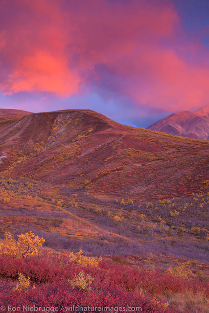Denali National Park, Alaska, photo, picture, sunet