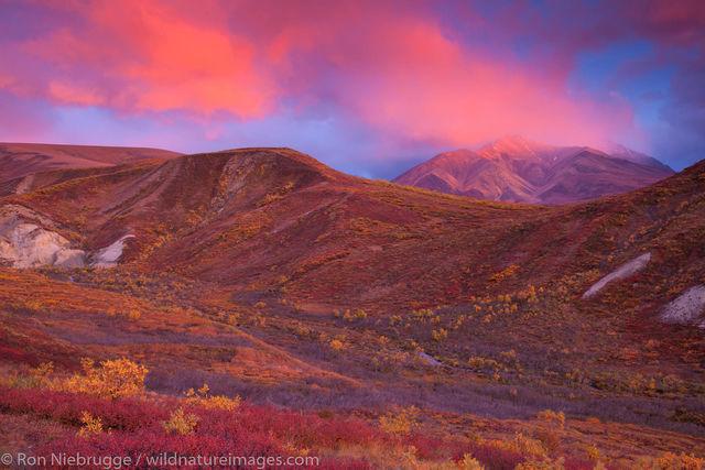 Autumn Sunset, Denali National Park