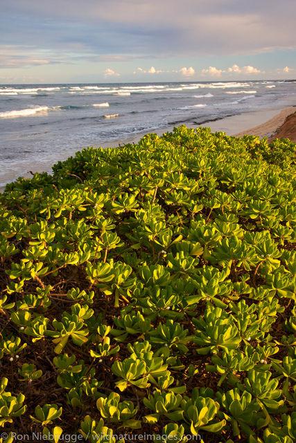 Kitchens Beach, Kauai, Hawaii