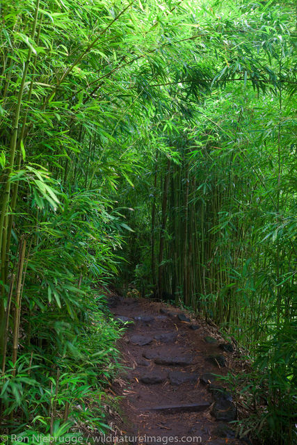 Bamboo Forest along the Pipiwai Trail