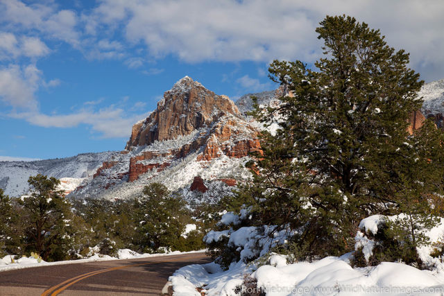 Schnebly Hill Road, Coconino National Forest