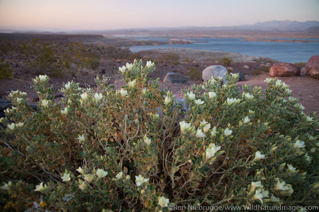 Lake Mead National Recreation