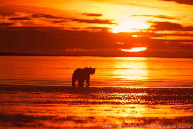 Lake Clark National Park, Alaska, brown bear, bears, grizzly