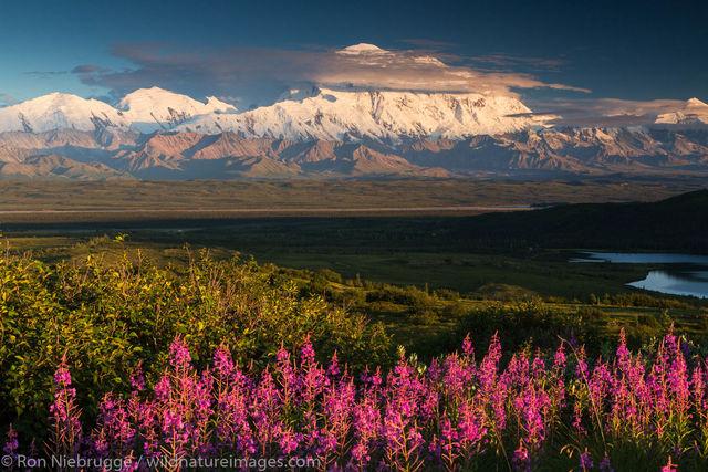 denali, mountain, fireweed,