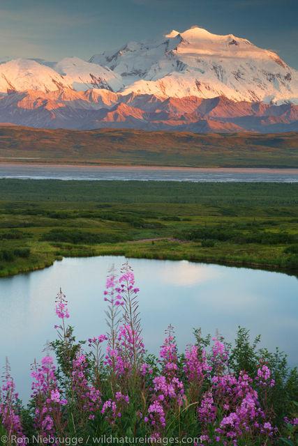 Denali National Park, Alaska, photo, picture
