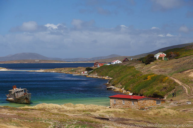 New Island Falklands