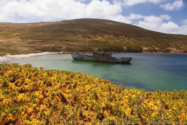 New Island Falklands