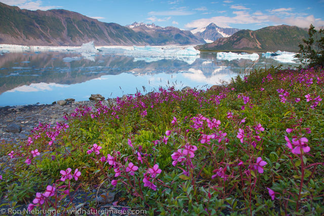 Kenai Fjords National Park, Alaska, Bear Glacier