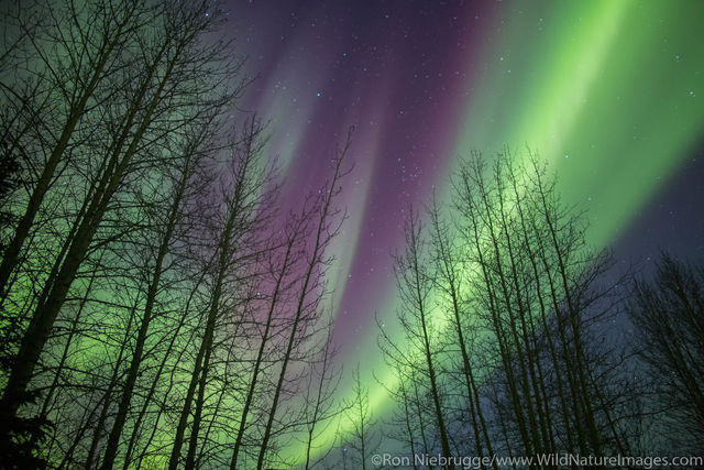 Arctic, Alaska, northern lights