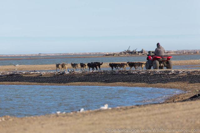 Dog Sled Training