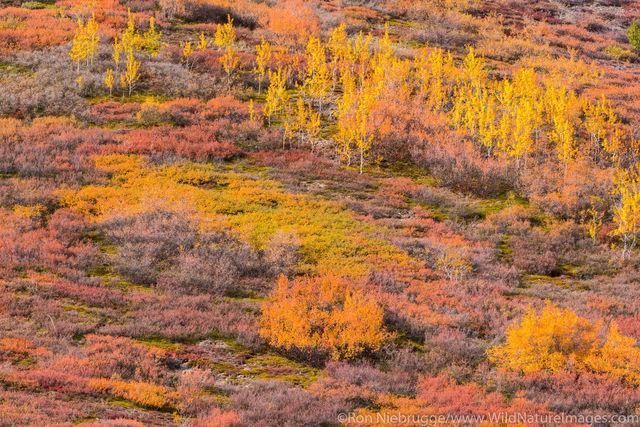 Autumn in Brooks Range
