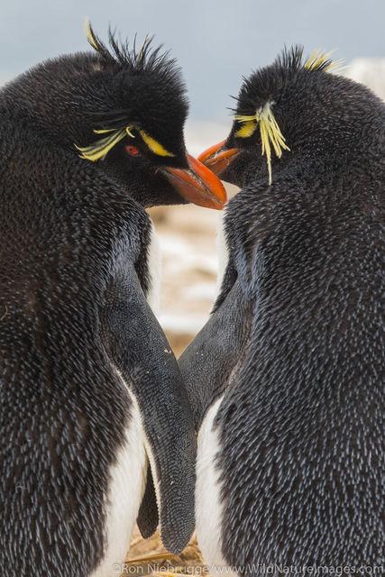 Falklands, Falkland islands, photos