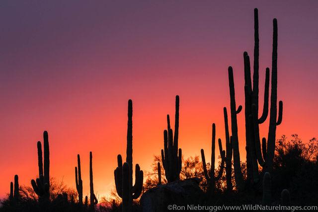 Sonoran Desert Photos