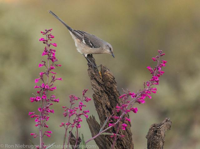 Tucson, Arizona, bird, photos