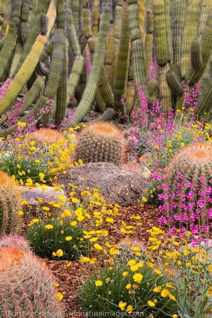Garden, Sonoran Desert Museum