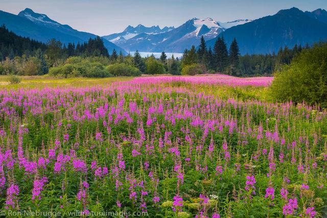 Tongass National Forest, Inside Passage, Alaska, Juneau, Brotherhood park,