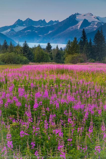 Tongass National Forest, Inside Passage, Alaska, Juneau, Mendenhall