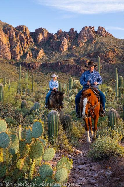 Horseback riding, horse, cowboy