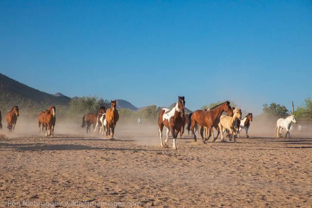 Horse Roundup