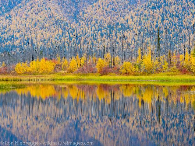 Autumn in the Brooks Range, Alaska