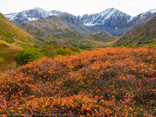 Autumn on the Kenai Peninsula, Alaska