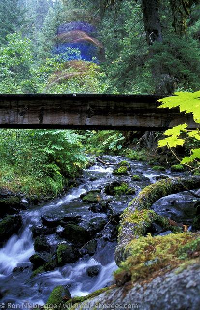 AK, Alaska, Alaskan, Americas, Chugach, Chugach National Forest, MR, Model release, National, North America, North American...