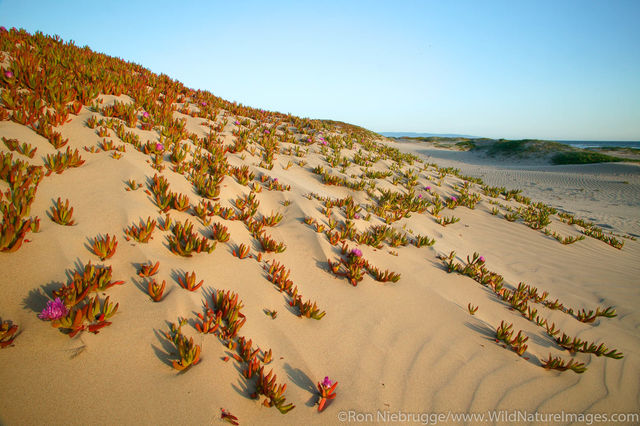 Pismo Beach State Park