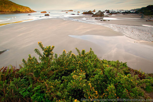 Harris Beach Morning