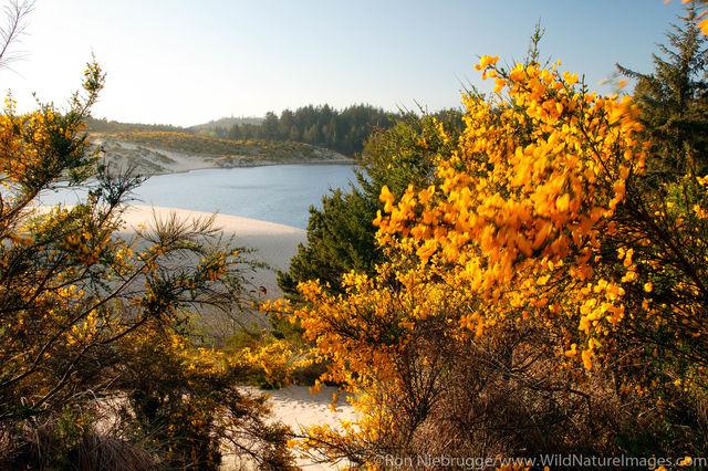 Jessie M Honeyman State Park,