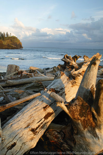 Driftwood Cape Disappointment