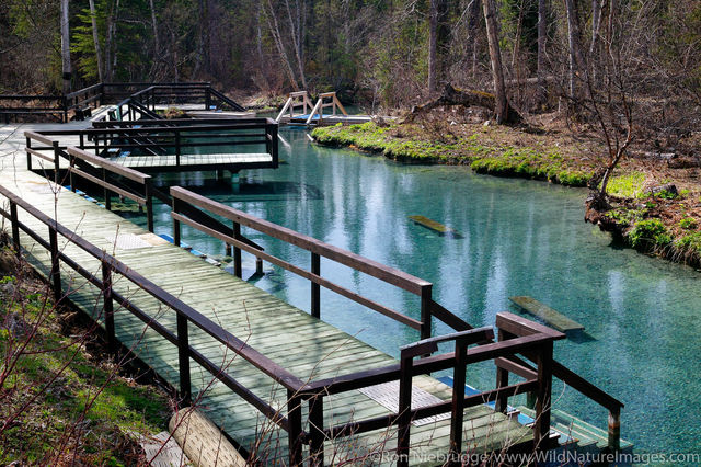 Liard River Hotsprings
