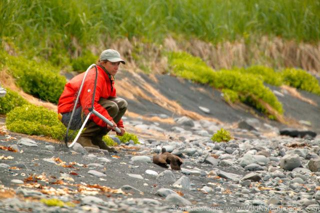 Oyster Catcher Researcher in Field
