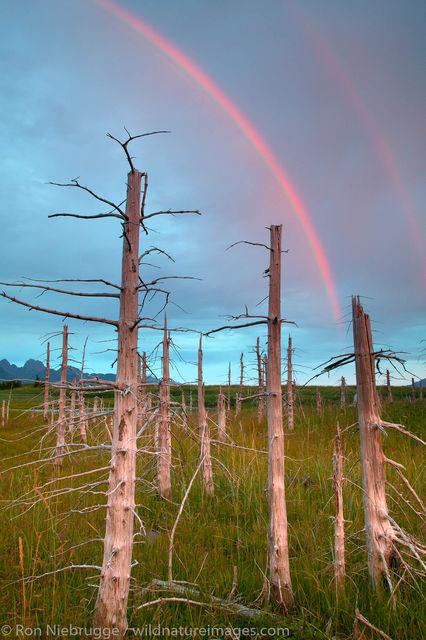 Aialik Bay Rainbow