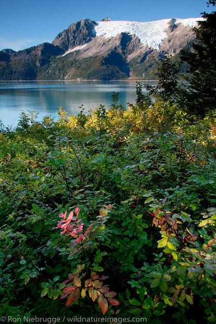 AK, Aialik, Aialik Bay, Ak., Alaska, America, American, Americas, Holegate, Holegate Arm, Kenai Fjords National Park, Magaptera...