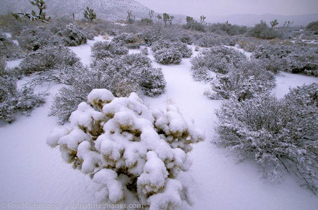 CA, Calif, Calif., California, Joshua tree, Joshua trees, Mojave desert, North America, North American, Pioneertown, Ron Niebrugge...