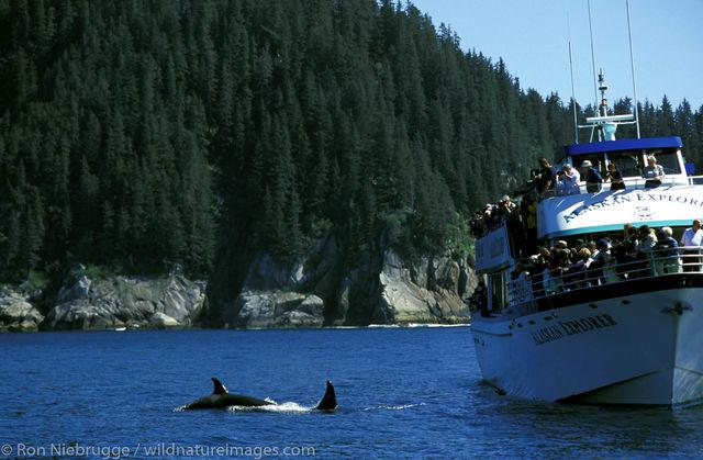 AK, Ak., Alaska, America, American, Americas, Kenai Fjords National Park, Kenai Fjords Tours, National, Niebrugge, North, North...