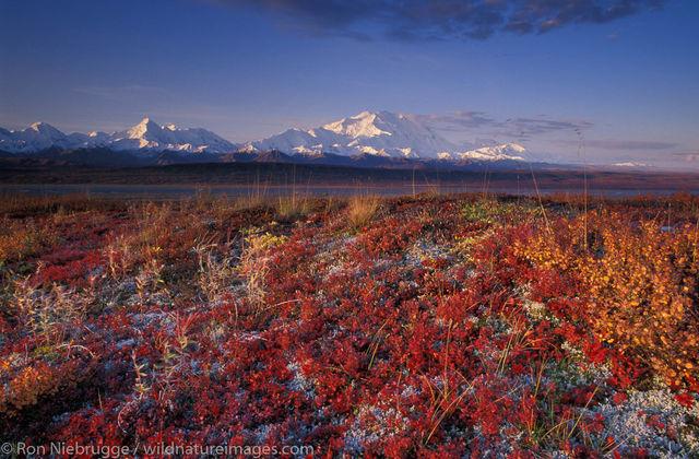 AK, Alaska, Alaskan, Americas, Arctic, Autumn, Denali, Denali National Park, Fall, Mt McKinley, Mt. McKinley, Mt.McKinley, MtMcKinley...