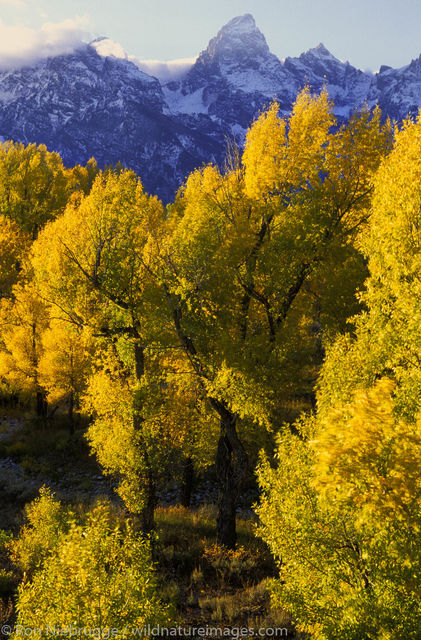 Americas, Autumn, Fall, Grand Teton National Park, Grand Teton's, Jackson Hole, National Park, North America, North American...